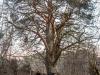 Редкие деревья получат статус памятников природы