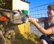 Молодых ветеринаров поддержат рублем