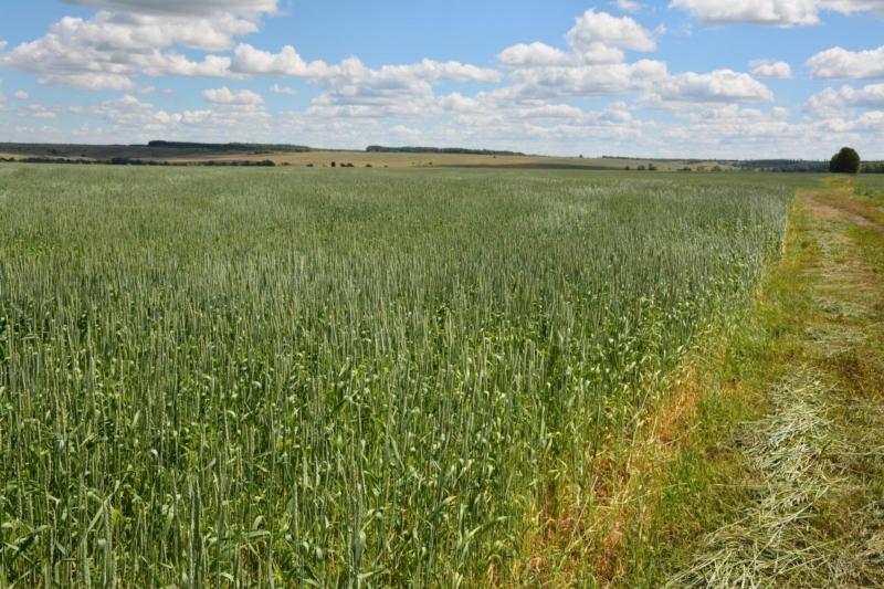 Участки для фермеров прирастут гектарами