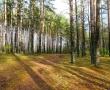 «Зеленый щит» Костромы