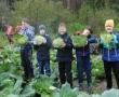 Битва за школьный урожай